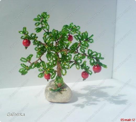 Яблоня с яблоками (экспериментальная) фото 5