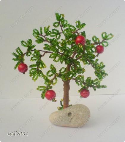 Яблоня с яблоками (экспериментальная) фото 4