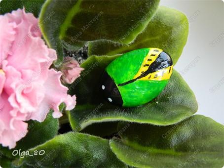 Из жизни насекомых... + сравнение красок фото 6