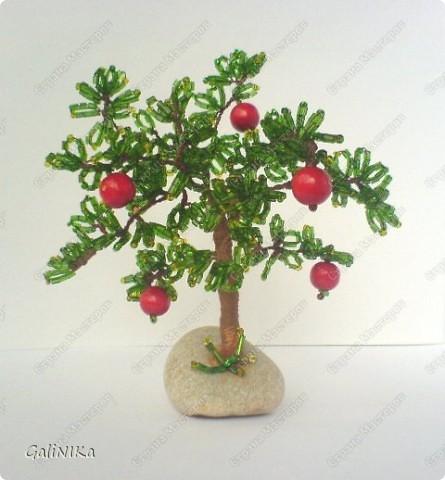 Яблоня с яблоками (экспериментальная) фото 1