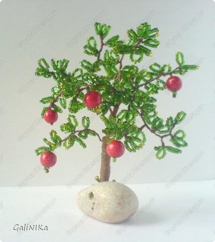 Яблоня с яблоками (экспериментальная) фото 7