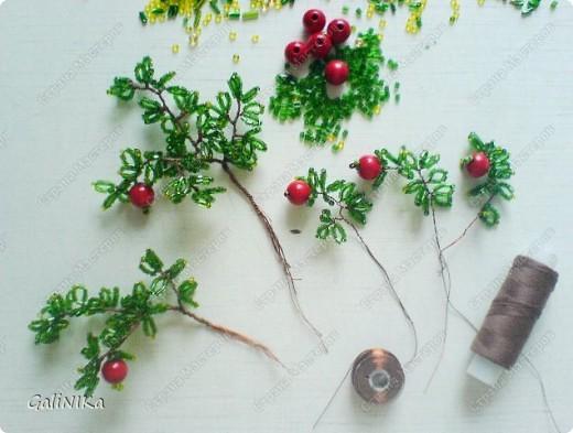 Яблоня с яблоками (экспериментальная) фото 2