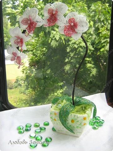 розовая орхидея фото 6