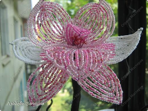 розовая орхидея фото 1