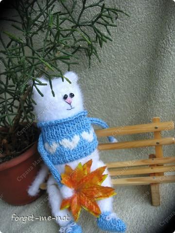 НЕмартовские котики фото 3