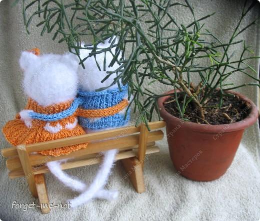 НЕмартовские котики фото 5