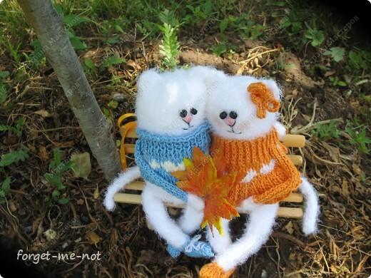 НЕмартовские котики фото 1