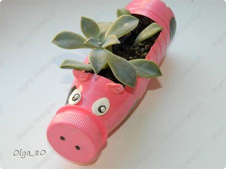 Идея взята у Тани Славной http://stranamasterov.ru/node/345784. Только она больших свиней вырастила. А у меня пока поросята. Пластиковые бутылки окрашены акриловыми красками. Глазки и уши из самозастывающей пластики, приклеены пистолетом. Потом все покрыто лаком. фото 4