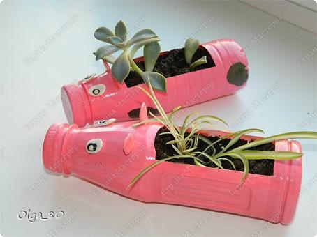 Идея взята у Тани Славной http://stranamasterov.ru/node/345784. Только она больших свиней вырастила. А у меня пока поросята. Пластиковые бутылки окрашены акриловыми красками. Глазки и уши из самозастывающей пластики, приклеены пистолетом. Потом все покрыто лаком. фото 2