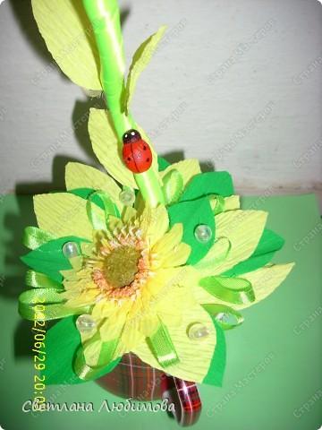 Моя сестра очень любит кофе и  подсолнухи .Решила сделать ей в подарок кофейно-подсолнуховый топиарий!  На создание такого чудо-цветка меня вдохновила работа Любы(зимняя вишенка). Спасибо вам за прекрасные работы! фото 2
