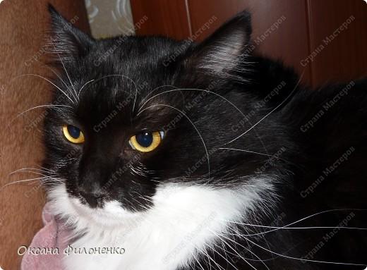 Котишка Тишка в цветах фото 6