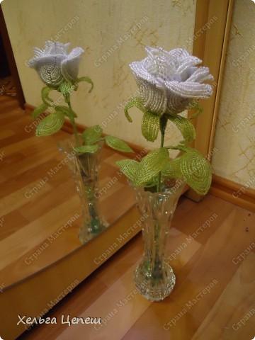 Розочки делала под заказ (все, кроме белой, она была в подарок). На каждую розу брала примерно по 5-7 дней.  фото 2