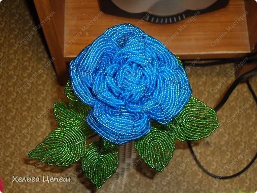 Розочки делала под заказ (все, кроме белой, она была в подарок). На каждую розу брала примерно по 5-7 дней.  фото 4