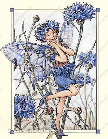 мой цветок-василёк фото 5