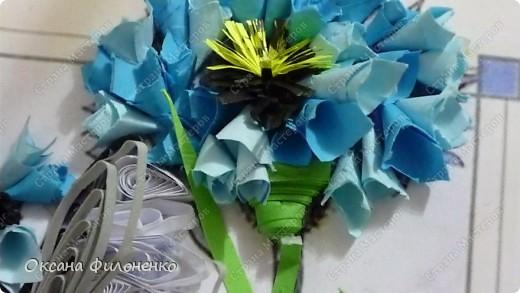 мой цветок-василёк фото 4