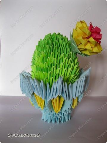 Вот и кактус расцвел!!!