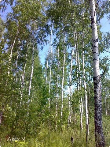 В березовую рощу заходишь словно в храм или дворец из детских сказок. Выбеленные стволы деревьев, перечеркнутые черными полосами и зеленая, не знающая пыли города, трава. фото 2