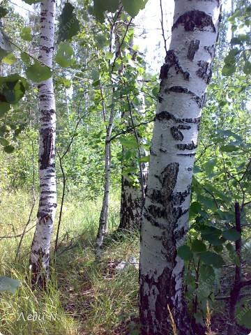 В березовую рощу заходишь словно в храм или дворец из детских сказок. Выбеленные стволы деревьев, перечеркнутые черными полосами и зеленая, не знающая пыли города, трава. фото 1