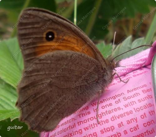 Очень увлекательно наблюдать за бабочками и их фотографировать. А сколько разных видов можно встретить в лесу, в поле и в огороде. Конечно, не все желают позировать, некоторые даже и не присядут, но всё-таки удаётся иногда сфотать даже самых строптивых. За этой перламутровкой гонялась минут пять, а когда устала и бросила это дело, она присела на чертополох и сидела на нём, не обращая на меня никакого внимания. И я поняла: это она место красивое выбирала. Думаю, что фото удалось. фото 5