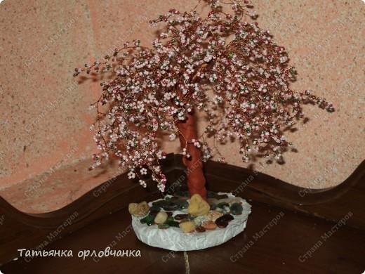 хризантема голубая фото 2