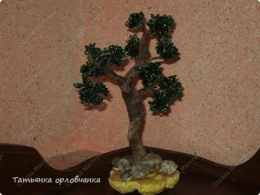 хризантема голубая фото 4