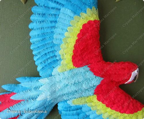 Очень мне понравилась эта птичка АнтониныШ http://stranamasterov.ru/node/350399 .Любовалась я ей несколько месяцев пока не решилась сделать и свою птичку. Размер работы 30 на 30 см.Размер работы в рамке 50 на 50 см.Все сделано из бумаги 125 граммовой, она больше подошла для перышек папугая, чем 80 граммовая. фото 7