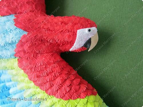 Очень мне понравилась эта птичка АнтониныШ http://stranamasterov.ru/node/350399 .Любовалась я ей несколько месяцев пока не решилась сделать и свою птичку. Размер работы 30 на 30 см.Размер работы в рамке 50 на 50 см.Все сделано из бумаги 125 граммовой, она больше подошла для перышек папугая, чем 80 граммовая. фото 9