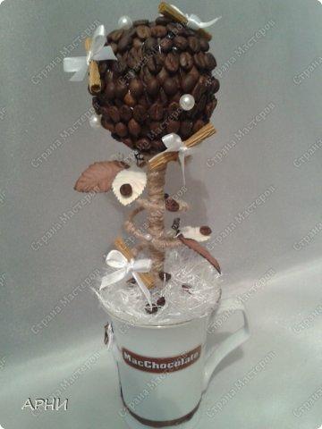 Первое кофейное деревце фото 1