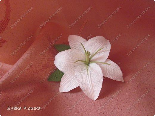 Моя первая лилия
