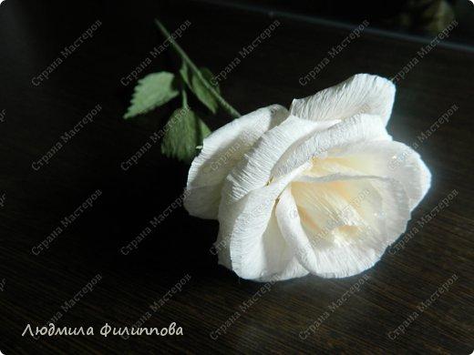 МК Роза из гофрированной