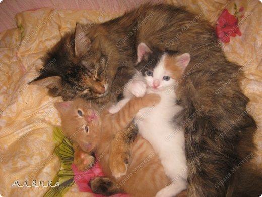 Мммм.... обожаю кошечек и котяток))) фото 6
