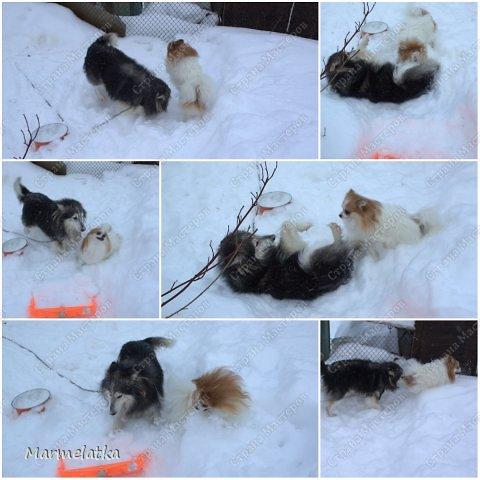 Чистим с Чипкой снег( Ну кто чистит, а кто играет)) фото 5