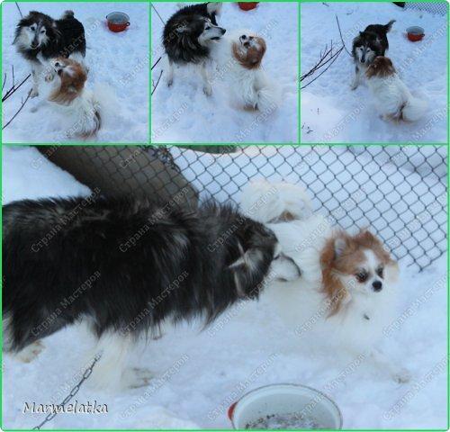 Чистим с Чипкой снег( Ну кто чистит, а кто играет)) фото 8