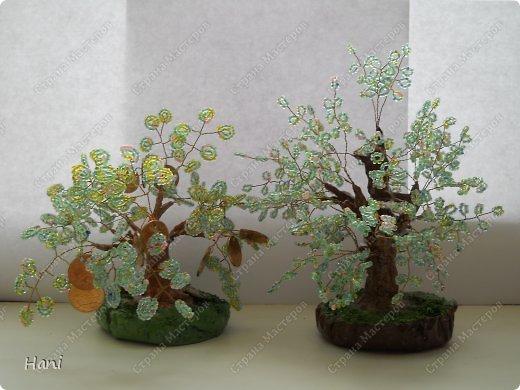 дерево - карамелька фото 2