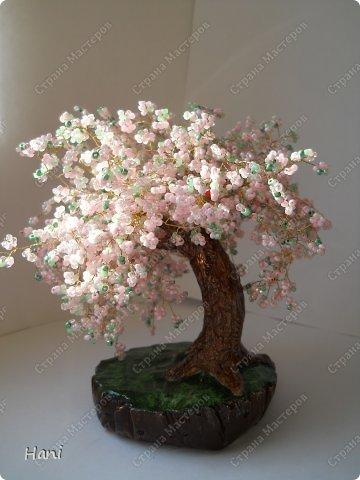 дерево - карамелька фото 5