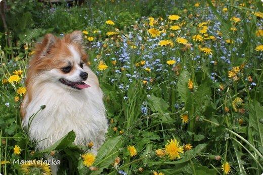 Наш сад-огород)) фото 10