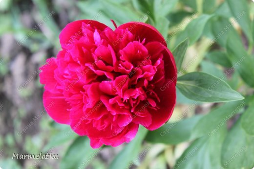 Наш сад-огород)) фото 13