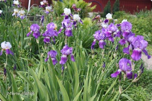 Наш сад-огород)) фото 9