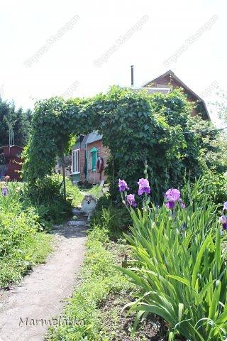 Наш сад-огород)) фото 4