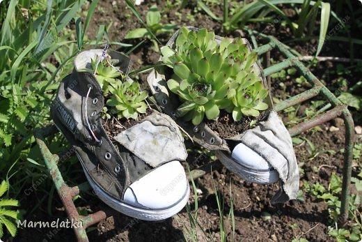 Наш сад-огород)) фото 3