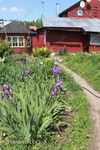 Наш сад-огород)) фото 1