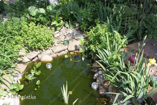 Наш сад-огород)) фото 5