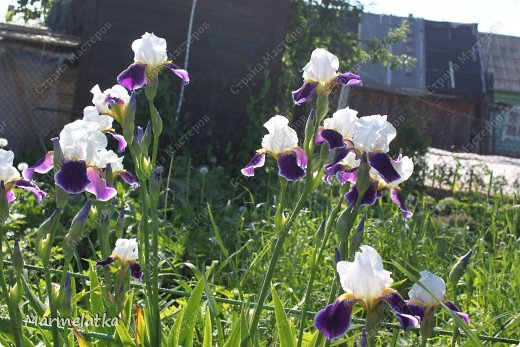 Наш сад-огород)) фото 6
