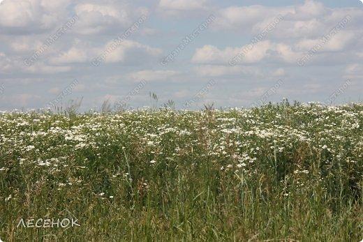 Добрый день всем!!!! Хочу с Вами поделиться прекрасными мгновениями счастья. Прогулками по полям и земляничным полянам.  Полевые цветы... Полевые... Васильки и ромашки в лугах... Ярко-синие и голубые – На бескрайних Российских полях.  Сколько нежности, яркости, света Вы храните в себе летним днем... Теплым солнцем весной вы согреты, И умыты осенним дождем...  Разукрашены радуги краской, Снежной шубой, укрыты зимой. Мать – Земля напоила вас лаской, Наградила небесной красой.  Полевые цветы... Полевые... Не сравнить вас с садовым цветком. Вы согрели мне душу, родные! Поселились вы в сердце моем! фото 5