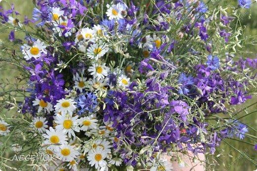 Добрый день всем!!!! Хочу с Вами поделиться прекрасными мгновениями счастья. Прогулками по полям и земляничным полянам.  Полевые цветы... Полевые... Васильки и ромашки в лугах... Ярко-синие и голубые – На бескрайних Российских полях.  Сколько нежности, яркости, света Вы храните в себе летним днем... Теплым солнцем весной вы согреты, И умыты осенним дождем...  Разукрашены радуги краской, Снежной шубой, укрыты зимой. Мать – Земля напоила вас лаской, Наградила небесной красой.  Полевые цветы... Полевые... Не сравнить вас с садовым цветком. Вы согрели мне душу, родные! Поселились вы в сердце моем! фото 12