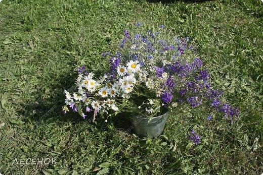 Добрый день всем!!!! Хочу с Вами поделиться прекрасными мгновениями счастья. Прогулками по полям и земляничным полянам.  Полевые цветы... Полевые... Васильки и ромашки в лугах... Ярко-синие и голубые – На бескрайних Российских полях.  Сколько нежности, яркости, света Вы храните в себе летним днем... Теплым солнцем весной вы согреты, И умыты осенним дождем...  Разукрашены радуги краской, Снежной шубой, укрыты зимой. Мать – Земля напоила вас лаской, Наградила небесной красой.  Полевые цветы... Полевые... Не сравнить вас с садовым цветком. Вы согрели мне душу, родные! Поселились вы в сердце моем! фото 13