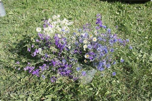 Добрый день всем!!!! Хочу с Вами поделиться прекрасными мгновениями счастья. Прогулками по полям и земляничным полянам.  Полевые цветы... Полевые... Васильки и ромашки в лугах... Ярко-синие и голубые – На бескрайних Российских полях.  Сколько нежности, яркости, света Вы храните в себе летним днем... Теплым солнцем весной вы согреты, И умыты осенним дождем...  Разукрашены радуги краской, Снежной шубой, укрыты зимой. Мать – Земля напоила вас лаской, Наградила небесной красой.  Полевые цветы... Полевые... Не сравнить вас с садовым цветком. Вы согрели мне душу, родные! Поселились вы в сердце моем! фото 15