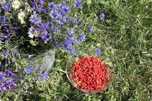 Добрый день всем!!!! Хочу с Вами поделиться прекрасными мгновениями счастья. Прогулками по полям и земляничным полянам.  Полевые цветы... Полевые... Васильки и ромашки в лугах... Ярко-синие и голубые – На бескрайних Российских полях.  Сколько нежности, яркости, света Вы храните в себе летним днем... Теплым солнцем весной вы согреты, И умыты осенним дождем...  Разукрашены радуги краской, Снежной шубой, укрыты зимой. Мать – Земля напоила вас лаской, Наградила небесной красой.  Полевые цветы... Полевые... Не сравнить вас с садовым цветком. Вы согрели мне душу, родные! Поселились вы в сердце моем! фото 16
