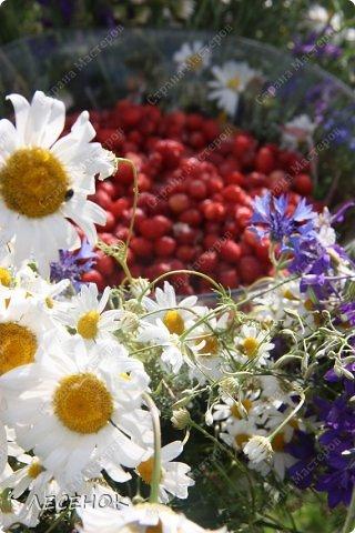 Добрый день всем!!!! Хочу с Вами поделиться прекрасными мгновениями счастья. Прогулками по полям и земляничным полянам.  Полевые цветы... Полевые... Васильки и ромашки в лугах... Ярко-синие и голубые – На бескрайних Российских полях.  Сколько нежности, яркости, света Вы храните в себе летним днем... Теплым солнцем весной вы согреты, И умыты осенним дождем...  Разукрашены радуги краской, Снежной шубой, укрыты зимой. Мать – Земля напоила вас лаской, Наградила небесной красой.  Полевые цветы... Полевые... Не сравнить вас с садовым цветком. Вы согрели мне душу, родные! Поселились вы в сердце моем! фото 17