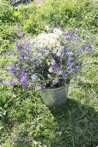 Добрый день всем!!!! Хочу с Вами поделиться прекрасными мгновениями счастья. Прогулками по полям и земляничным полянам.  Полевые цветы... Полевые... Васильки и ромашки в лугах... Ярко-синие и голубые – На бескрайних Российских полях.  Сколько нежности, яркости, света Вы храните в себе летним днем... Теплым солнцем весной вы согреты, И умыты осенним дождем...  Разукрашены радуги краской, Снежной шубой, укрыты зимой. Мать – Земля напоила вас лаской, Наградила небесной красой.  Полевые цветы... Полевые... Не сравнить вас с садовым цветком. Вы согрели мне душу, родные! Поселились вы в сердце моем! фото 21